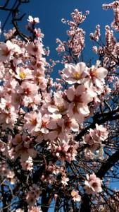 Bahar Her Yerde, Bahar İçimizde